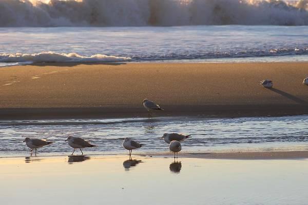 Photograph - Seagulls Reflection by Robert Banach