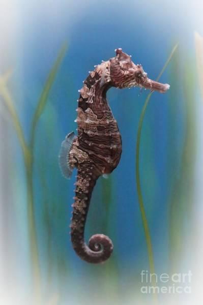 Photograph - Seahorse - Digital Painting by Carol Groenen