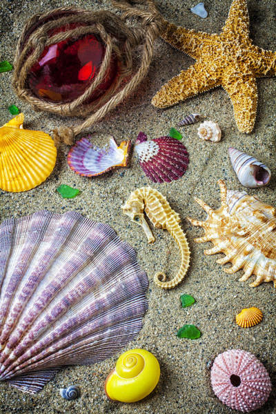 Seahorse Photograph - Seahorse With Many Sea Shells by Garry Gay