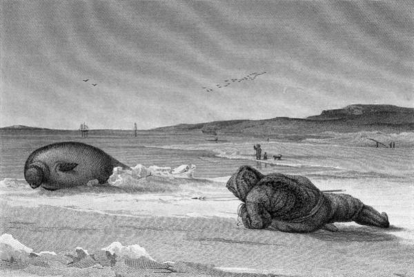 Canadian Fauna Photograph - Seal Hunting by George Bernard/science Photo Library