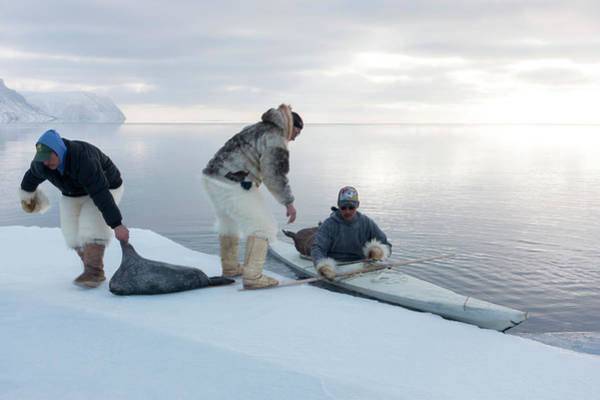 Kayak Photograph - Seal Hunting by Louise Murray