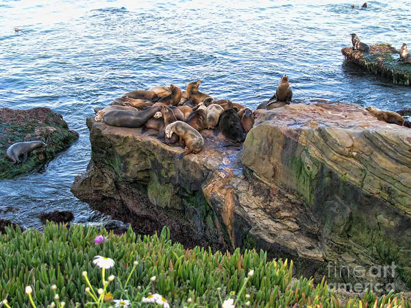 Wall Art - Photograph - Seals And Pups by Peter Awax