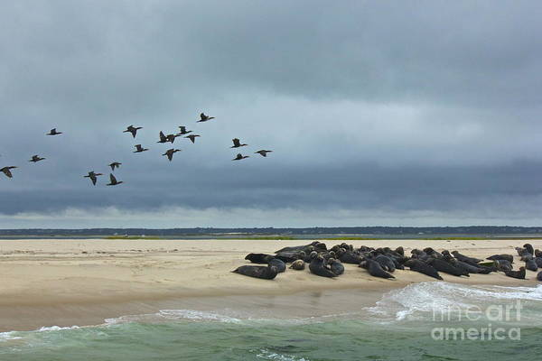 Photograph - Seals And Sea Birds by Amazing Jules
