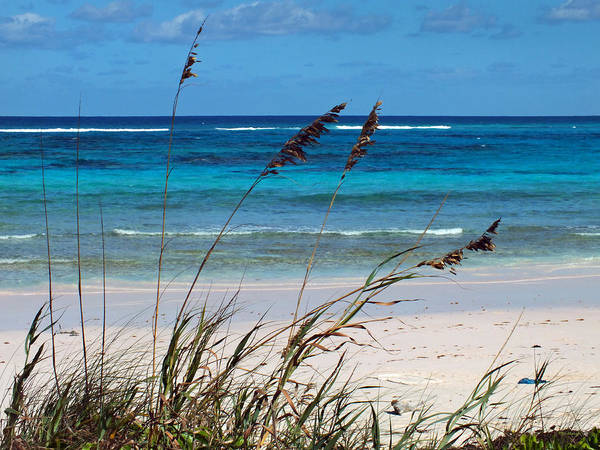 Photograph - Seaoat Plants And Beach On Eleuthera by Duane McCullough