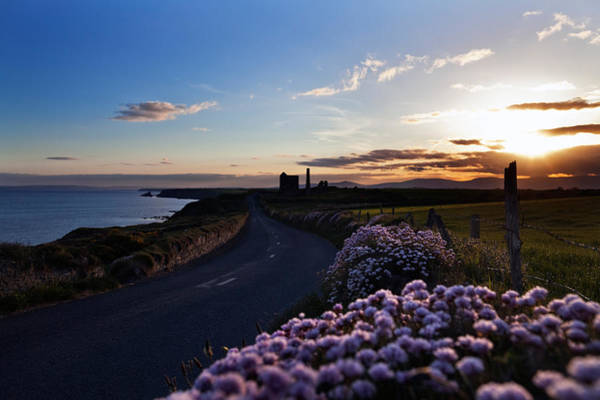 County Waterford Photograph - Seapink Lining The Country Road by Panoramic Images