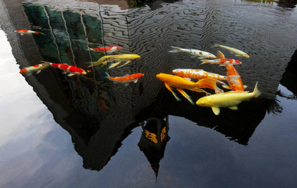 Koi Pond Photograph - Searching For Religion by James Roemmling