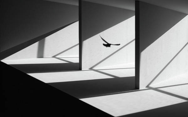Flying Bird Photograph - Searching Way Out by Huib Limberg
