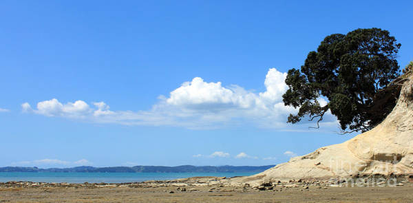 Pohutukawa Photograph - Seascape by Gee Lyon