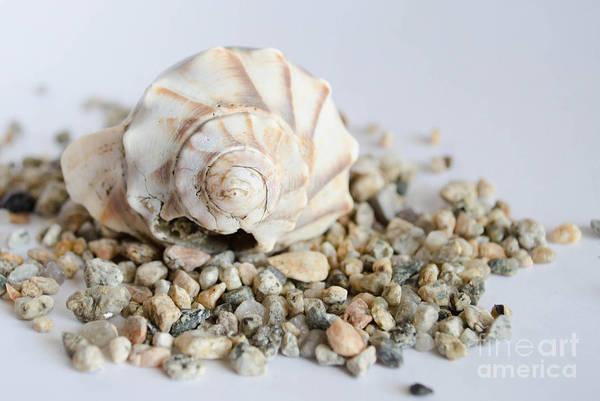 Photograph - Seashell 2 by Andrea Anderegg