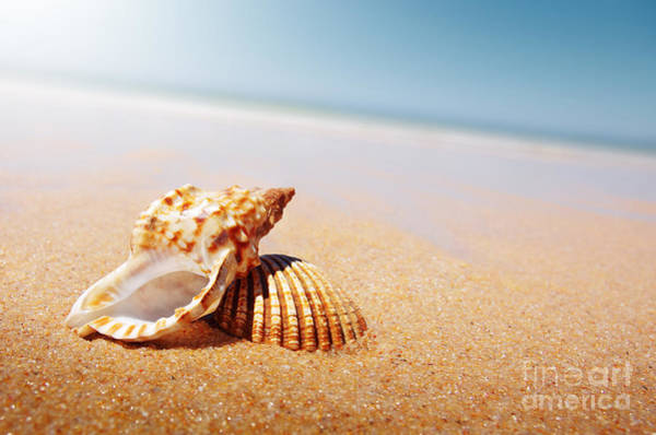 Sand Wall Art - Photograph - Seashell And Conch by Carlos Caetano