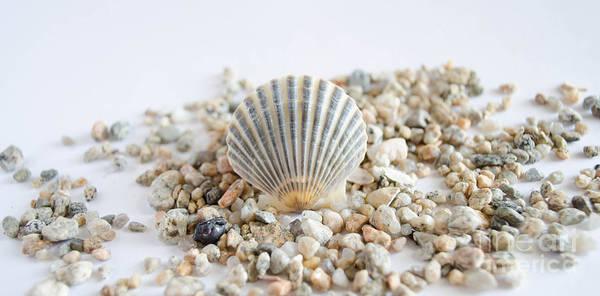 Photograph - Seashell by Andrea Anderegg