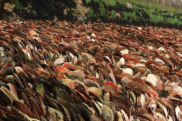 Photograph - Seashell Coast by Aidan Moran