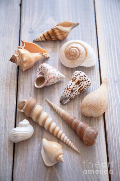 Seashell Photograph - Seashell Collection by Jan Bickerton