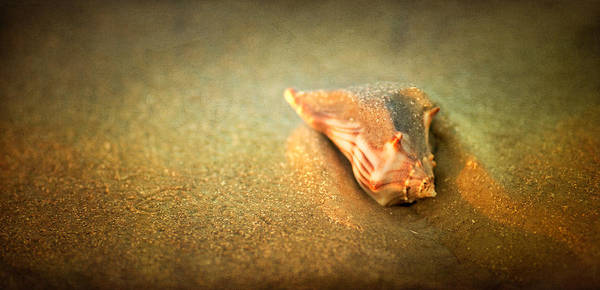 Photograph - Seashell by Joye Ardyn Durham