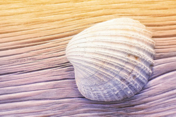 Photograph - Seashell by Lutz Baar