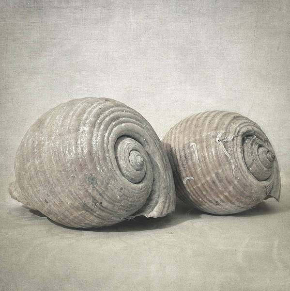 Wall Art - Photograph - Seashell No.3 by Zapista Zapista