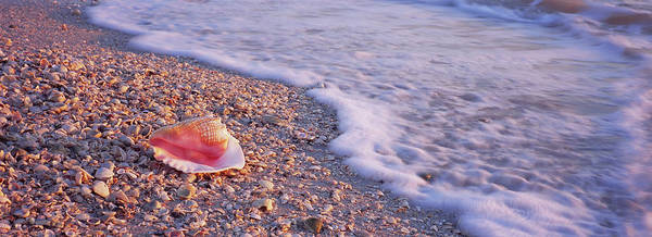 Wall Art - Photograph - Seashell On The Beach, Lovers Key State by Animal Images