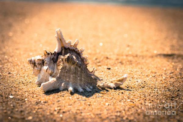 Three Seashells Photograph - Seashell On The Beach by Tom Gari Gallery-Three-Photography