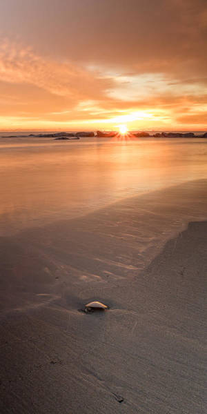 Photograph - Seashell On The Shore At Sunrise by Jeff Sinon