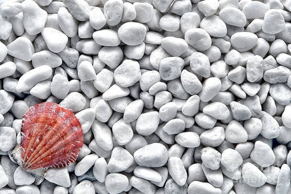 Photograph - Seashell On White Pebbles by Olivier Le Queinec