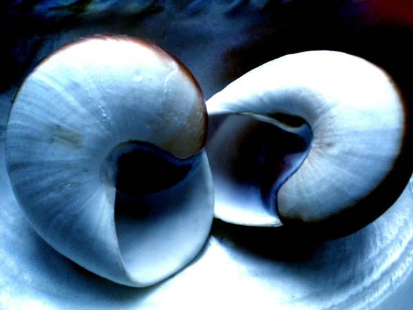 Photograph - Seashell Rest by Colette V Hera  Guggenheim