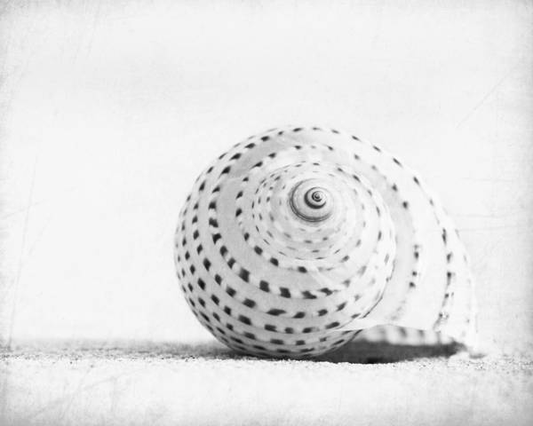 Beaches Photograph - Seashell Voices by Carolyn Cochrane