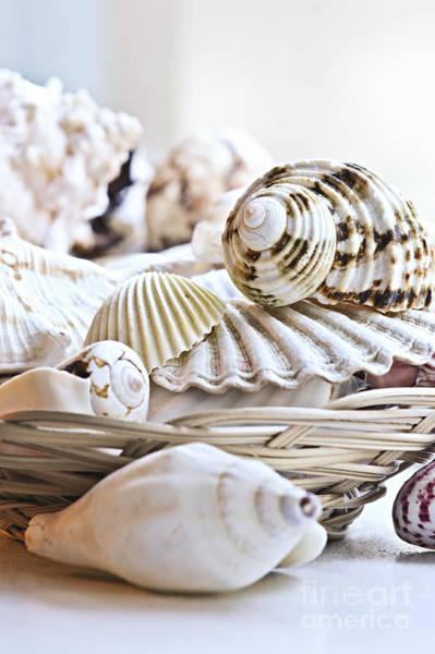 Photograph - Seashells by Elena Elisseeva