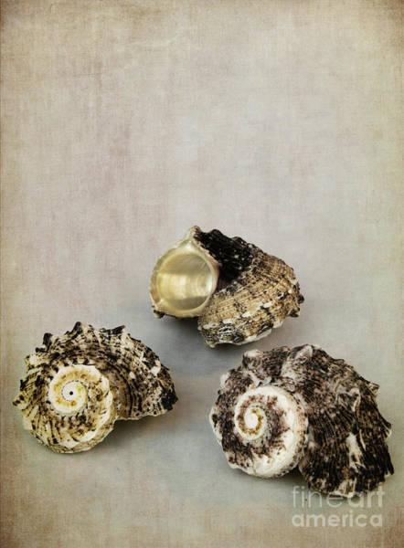 Marine Biology Wall Art - Photograph - Seashells by Elena Nosyreva