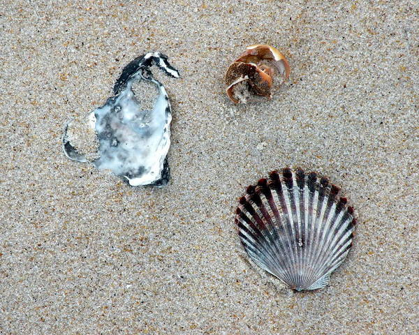 Photograph - Seashells On The Beach by Kim Bemis