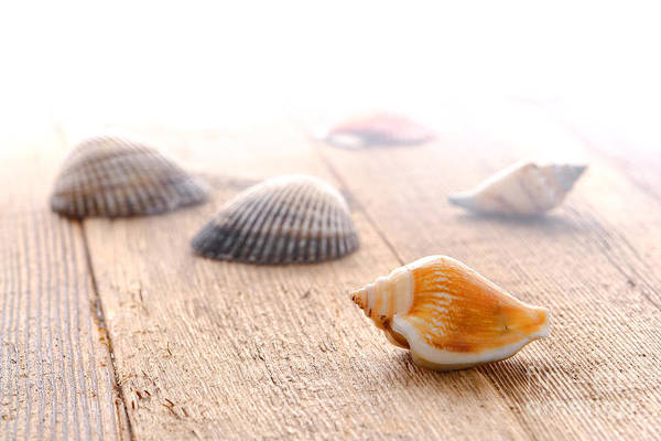 Photograph - Seashells On Wood Dock by Olivier Le Queinec
