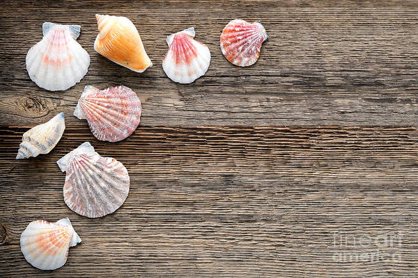 Photograph - Seashells On Wood by Olivier Le Queinec
