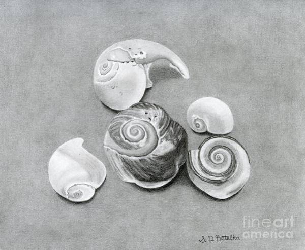 Shadows Drawing - Seashells by Sarah Batalka