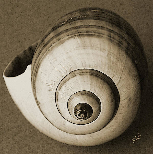 Photograph - Seashells Spectacular No 25 by Ben and Raisa Gertsberg