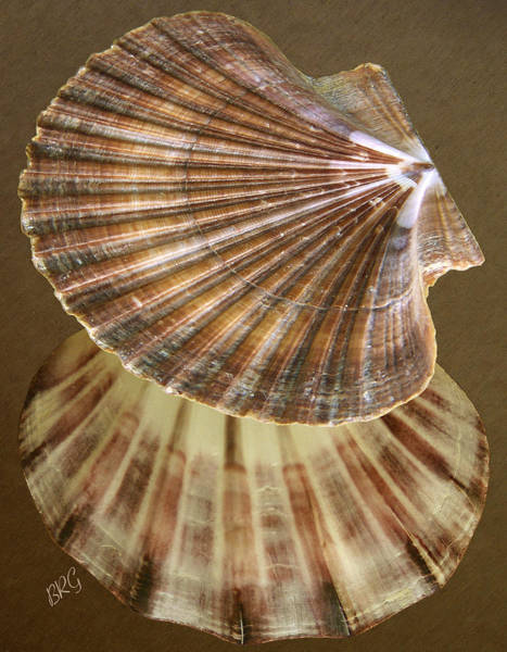 Photograph - Seashells Spectacular No 54 by Ben and Raisa Gertsberg