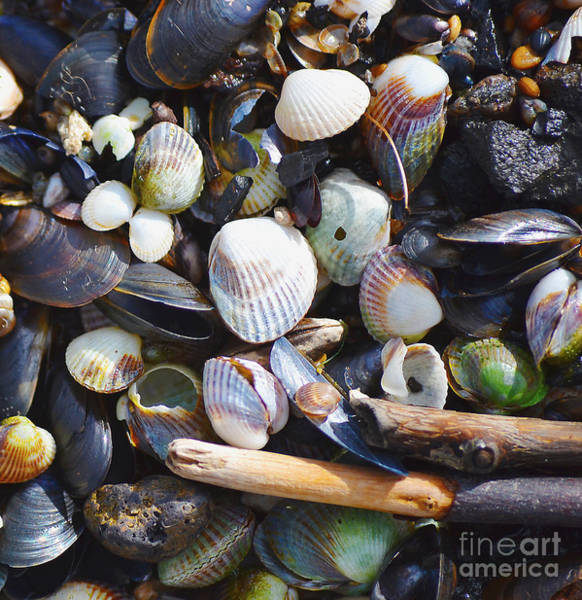 Photograph - Seashells by Tine Nordbred