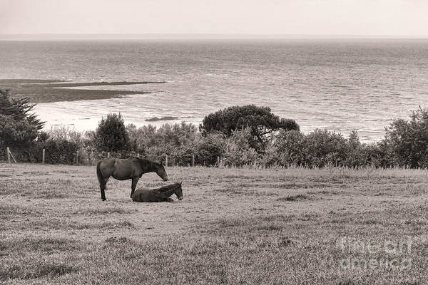 Photograph - Seaside Horses by Olivier Le Queinec