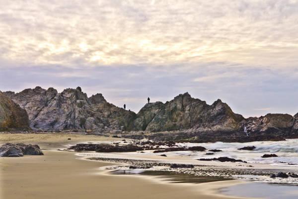 Photograph - Seaside Sentinels by Priya Ghose