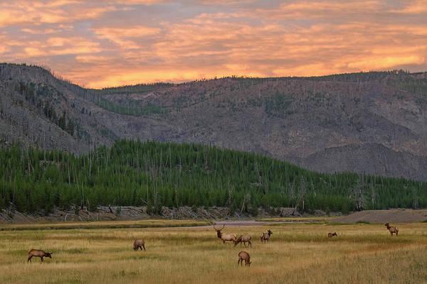 Elk Herd Photograph - Season Of The Elk by Sandy Sisti
