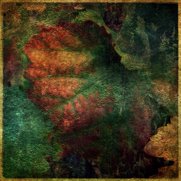 Iphoneography Wall Art - Photograph - Seasons 1 by Tracy J Thomas