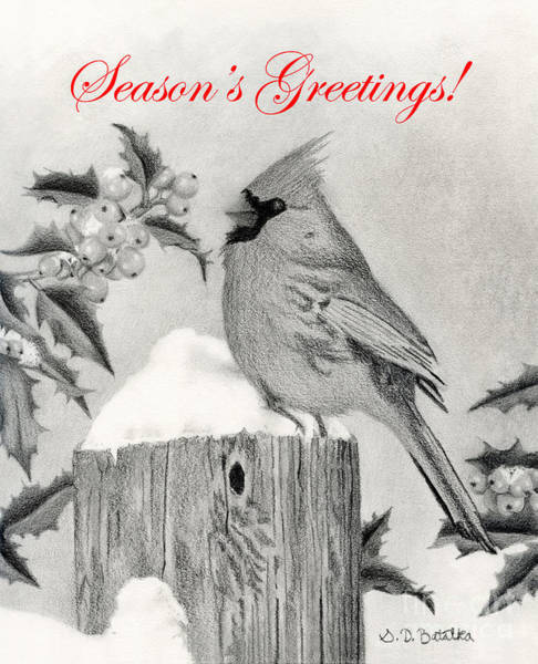 Hand Drawn Drawing - Cardinal And Holly- Season's Greetings Cards by Sarah Batalka