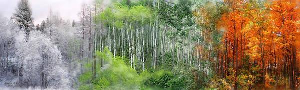 Mixed Media - Seasons Of The Aspen by Carol Cavalaris