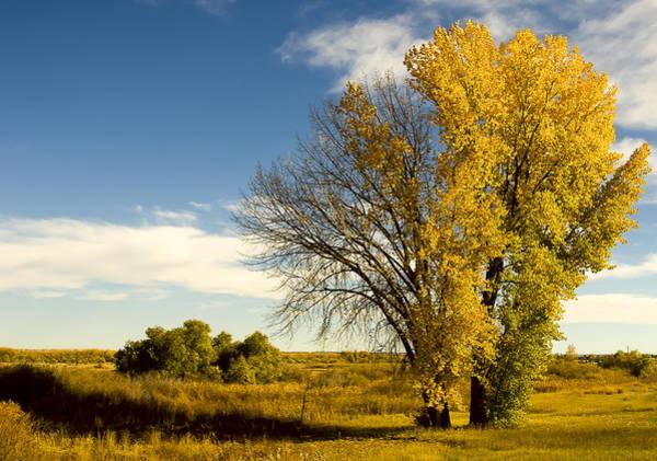 Photograph - Seasons by Steve Thompson