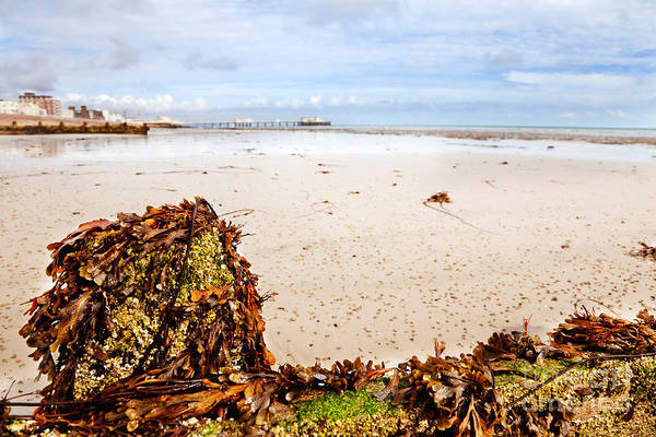 Waterbreak Wall Art - Photograph - Seaweed And Barnacles Worthing by Jo Ann Snover