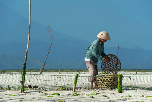 Seaweed Photograph - Seaweed Farmer On Nusa Lembongan, Bali by Dallas Stribley