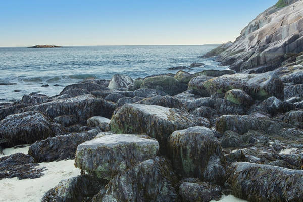 Seaweed Photograph - Seaweed On Rocks At The Waters Edge by Susan Dykstra / Design Pics