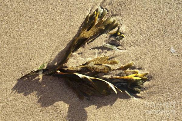 Photograph - Seaweed On The Beach by Jeremy Hayden