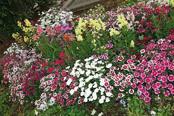 Snapdragons Painting - Secret Garden by Ellen Henneke
