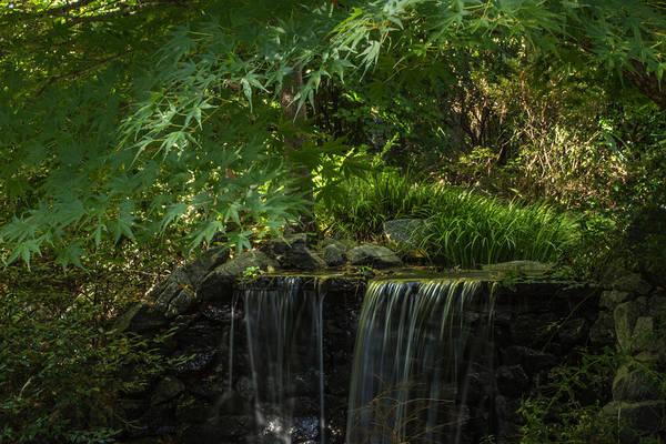 Photograph - Secret Garden by Julie Andel
