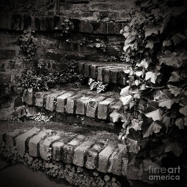 Photograph - Secret Garden Stairs by Charmian Vistaunet