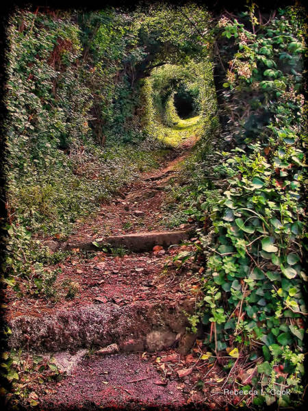 Photograph - Secret Path On Guernsey by Bellesouth Studio